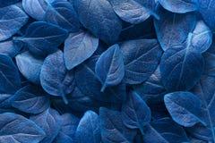Disposizione blu creativa delle foglie Concetto soprannaturale Spazio piano della copia di vista superiore di disposizione fotografia stock
