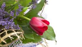 Disposizione con il tulipano del fiore. immagini stock