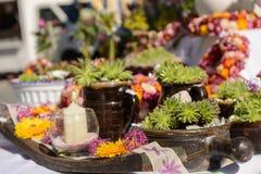 Disposizione creativa dei succulenti Fotografie Stock Libere da Diritti