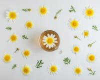 Disposizione creativa del fiore della margherita bianca con la tazza di t? su fondo bianco Concetto minimo della molla Disposizio fotografia stock libera da diritti