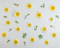 Disposizione creativa del fiore della margherita bianca su fondo bianco Concetto minimo della molla Disposizione piana immagini stock libere da diritti