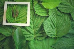 Disposizione creativa fatta dei fiori e delle foglie con la nota della carta di carta Disposizione piana Concetto della natura Fotografie Stock