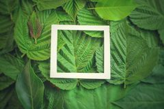 Disposizione creativa fatta dei fiori e delle foglie con la nota della carta di carta Disposizione piana Concetto della natura Immagini Stock Libere da Diritti