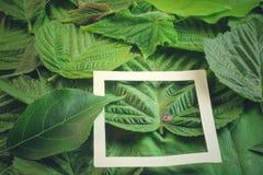 Disposizione creativa fatta dei fiori e delle foglie con la nota della carta di carta Disposizione piana Concetto della natura Fotografia Stock