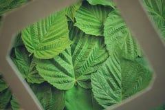 Disposizione creativa fatta dei fiori e delle foglie con la nota della carta di carta Disposizione piana Concetto della natura Fotografie Stock Libere da Diritti