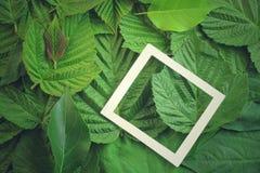 Disposizione creativa fatta dei fiori e delle foglie con la nota della carta di carta Disposizione piana Concetto della natura Immagine Stock Libera da Diritti