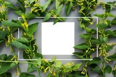 Disposizione creativa fatta dei fiori selvaggi e delle foglie con la nota della carta di carta Disposizione piana Concetto della  immagini stock libere da diritti