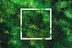 Disposizione creativa fatta delle foglie Fotografia Stock Libera da Diritti