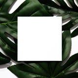 Disposizione creativa fatta delle foglie tropicali fotografie stock
