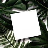 Disposizione creativa fatta delle foglie tropicali fotografia stock libera da diritti