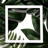 Disposizione creativa fatta delle foglie tropicali fotografie stock libere da diritti