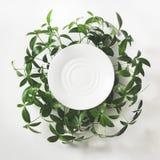 Disposizione creativa fatta delle foglie verdi con lo spazio in bianco vuoto per la nota su fondo bianco Vista superiore fotografia stock