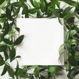 Disposizione creativa fatta delle foglie verdi con lo spazio in bianco vuoto per la nota su fondo bianco Vista superiore fotografia stock libera da diritti