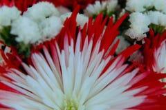 disposizione dei fiori stock footage