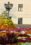disposizione dei fiori Fotografie Stock Libere da Diritti