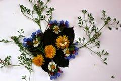 disposizione dei fiori Immagine Stock Libera da Diritti