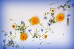 disposizione dei fiori Fotografia Stock Libera da Diritti