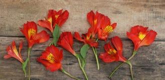 Disposizione dei fiori arancio rossa di Astromeria di Alstroemeria sopra la disposizione di legno rustica del piano della Tabella Immagini Stock Libere da Diritti