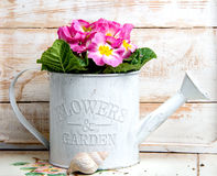 Disposizione dei fiori d'annata con la conchiglia Fotografia Stock Libera da Diritti
