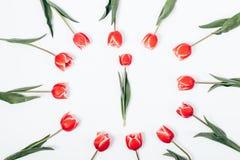 Disposizione dei fiori del punto di vista superiore dei tulipani rossi immagine stock
