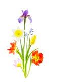 Disposizione dei fiori della molla su bianco immagini stock