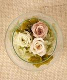 Disposizione dei fiori di Rosa Fotografia Stock