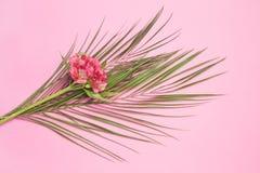 disposizione dei fiori fotografie stock
