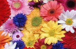 Disposizione dei fiori recisi immagini stock