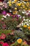 Disposizione dei fiori in vaso del fiorista Fotografia Stock