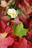 Disposizione dei fogli di autunno ed una Rosa Fotografia Stock Libera da Diritti
