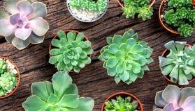 Disposizione dei succulenti o del cactus su fondo di legno, overhe Fotografia Stock Libera da Diritti