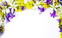 Disposizione dei Wildflowers con copyspace su fondo bianco immagini stock