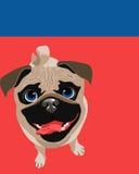 Disposizione del manifesto con il cane del carlino Fotografia Stock