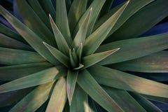 Disposizione del punto di vista sopraelevato o superiore dei succulenti o dei succulenti del cactus, Fotografie Stock Libere da Diritti