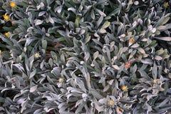 Disposizione del punto di vista sopraelevato o superiore dei succulenti o dei succulenti del cactus, Immagini Stock
