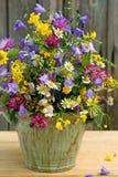Disposizione del Wildflower Fotografia Stock Libera da Diritti