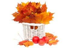 Disposizione dell'autunno - fogli e mele Fotografia Stock Libera da Diritti