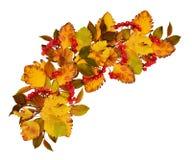 Disposizione dell'onda di autunno dalle foglie e dal berrie colorati asciutti della sorba fotografia stock libera da diritti