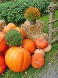 Disposizione della raccolta di autunno Fotografia Stock