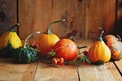 Disposizione delle zucche decorative Fotografia Stock