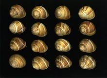 Disposizione di Escargot fotografie stock