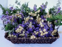 Disposizione di fiore artistica Immagini Stock
