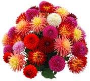Disposizione di fiore dei crisantemi e delle dalie immagine stock