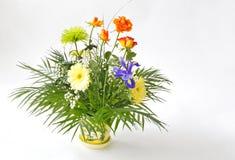 Disposizione di fiore fresco Immagine Stock Libera da Diritti