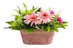 Disposizione di fiore isolata fotografie stock libere da diritti