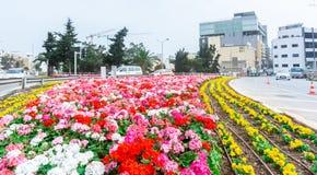 Disposizione di fiori e rotonde fotografia stock libera da diritti