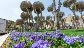 Disposizione di fiori e rotonde a Malta fotografia stock