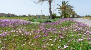 Disposizione di fiori e rotonde a Malta fotografie stock libere da diritti