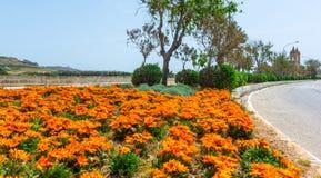 Disposizione di fiori e rotonde a Malta immagini stock
