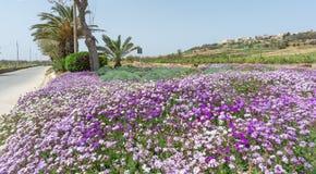 Disposizione di fiori e rotonde a Malta immagini stock libere da diritti